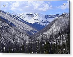 Acrylic Print featuring the photograph Yellowstone East Entrance Spring by Nadalyn Larsen