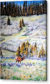 Yellowstone Elk Acrylic Print by Tracy Rose Moyers