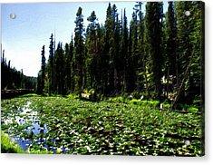 Yellowstone Lily Pads  Acrylic Print