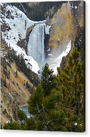 Acrylic Print featuring the photograph Yellowstone Lower Falls In Spring by Michele Myers