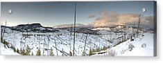 Yellowstone Morning Acrylic Print by David Yack
