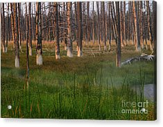 Acrylic Print featuring the photograph Yellowstone Mysterious Morning by Teresa Zieba