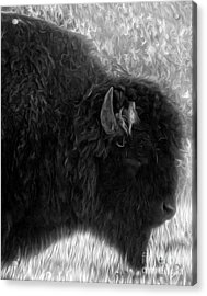 Yellowstone National Park Bison - 02 Acrylic Print by Gregory Dyer