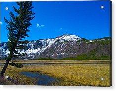 Yellowstone National Park Acrylic Print