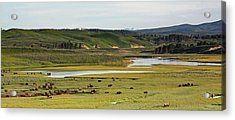 Yellowstone River In Hayden Valley In Yellowstone National Park Acrylic Print