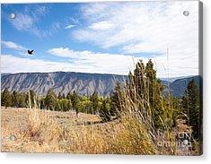 Yellowstone View Acrylic Print by Cindy Singleton
