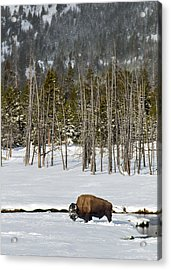 Yellowstone Winter Acrylic Print