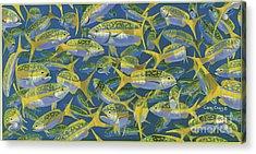 Yellowtail Frenzy In0023 Acrylic Print by Carey Chen