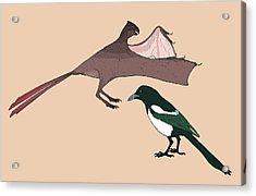 Yi Qi Dinosaur Size Comparison Acrylic Print by Nemo Ramjet