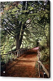 Acrylic Print featuring the painting Yockletts Bank by Rosemary Colyer