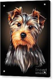 Yorkie Portrait By Spano Acrylic Print by Michael Spano