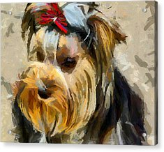 Acrylic Print featuring the painting Yorkshire Terrier by Georgi Dimitrov