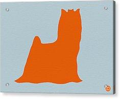 Yorkshire Terrier Orange Acrylic Print by Naxart Studio