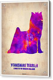 Yorkshire Terrier Poster Acrylic Print