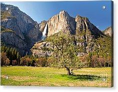 Yosemite Meadow With Tree Acrylic Print by Jane Rix
