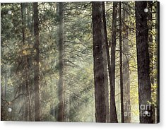 Yosemite Pines In Sunlight Acrylic Print by Jane Rix