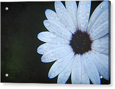 You Answered My Cry Acrylic Print by Laurie Search