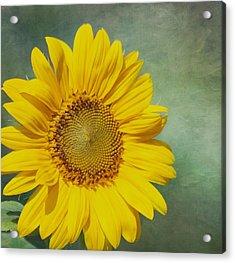 You Are My Sunshine Acrylic Print by Kim Hojnacki