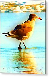 You Are The Only Gull For Me Acrylic Print by Brian D Meredith