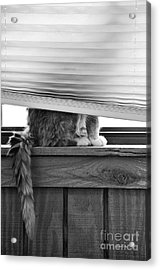 You Can't See Me Acrylic Print