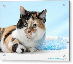 You Had Me At Meow..... Acrylic Print