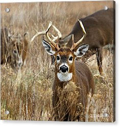 You Lookin At Me? Acrylic Print by Butch Lombardi