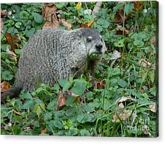 You Looking At Me? Acrylic Print