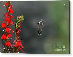 Acrylic Print featuring the photograph You Looking At Me by Judy Wolinsky