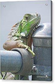 You Look'n At Me Acrylic Print by Chrisann Ellis