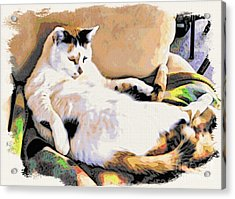 You Move The Stuff From The Corrner. I Need My Nap. Acrylic Print by Phyllis Kaltenbach