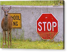 You Said Stop Acrylic Print by Kym Backland