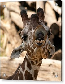 Acrylic Print featuring the photograph You So Funny by Julie Clements