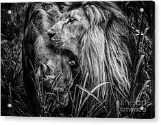 You Will Be Queen Acrylic Print by Traven Milovich
