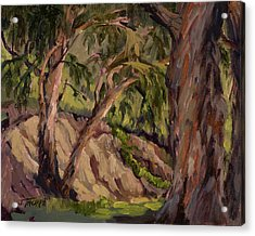 Young And Old Eucalyptus Acrylic Print by Jane Thorpe