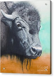 Young Bull Acrylic Print