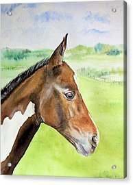 Acrylic Print featuring the painting Young Cob by Elizabeth Lock