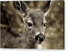 Young Curious Deer Acrylic Print