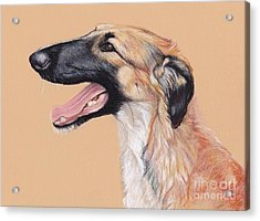 Young Female Borzoi Acrylic Print by Charlotte Yealey