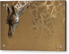 Young Giraffe Acrylic Print by Aaron Blaise