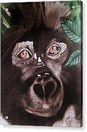 Young Gorilla Acrylic Print