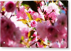 Your The One Acrylic Print by Will Boutin Photos