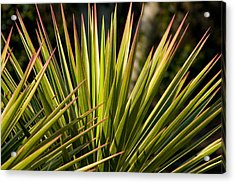Yucca 1 Acrylic Print by Frank Tozier