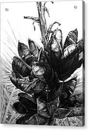 Yucca Acrylic Print by Aaron Spong