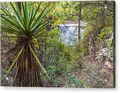 Acrylic Print featuring the photograph Yucca And Waterfall by Beverly Parks