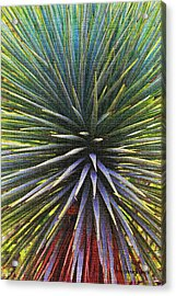 Yucca At The Arboretum Acrylic Print by Tom Janca