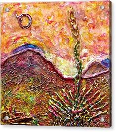 Yucca Cactus At Sunset Acrylic Print by Joe Bourne