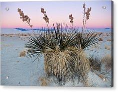 Yucca Dawn Acrylic Print