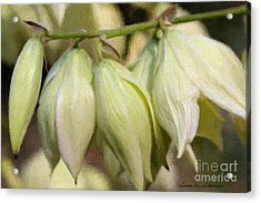 Yucca Flowers No. 1 Acrylic Print