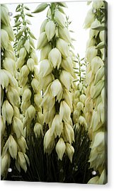 Yucca Forest Acrylic Print by Steven Milner