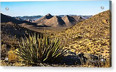 Yucca In High Deaert Acrylic Print by Robert Bales